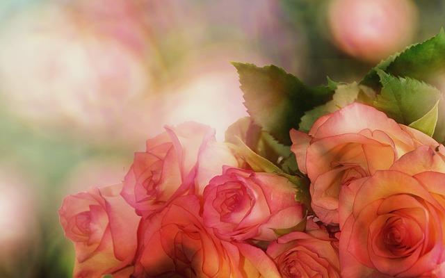 růžová romance