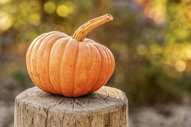 dýně na podzim